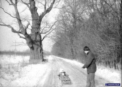 Zimowa Nowoursynowska, a to wielkie drzewo to oczywiście Dąb Mieszko. Nad. Magdalena Słowińska.