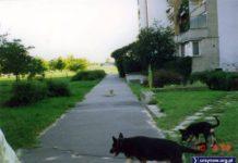 Psy na zdjęciu znalazły się nieprzypadkowo - wszak ta zielona przestrzeń na tyłach ulicy Miklaszewskiego nazywała się Psim Polem. Zdjęcie nadesłał Wojciech Nehyba.