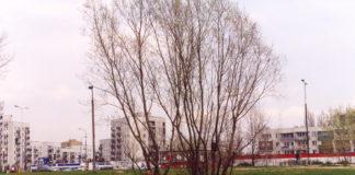 Placyk u zbiegu Herbsta i Alei KEN nad wyjściem z metra Stokłosy. Obok drzewa widoczna samotna latarnia, relikt budowy Ursynowa. Za dwa lata powstanie tu kolos spółdzielni Włodarzewska. Fot. Joanna Gocławska-Mazur.