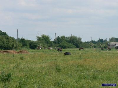 Konie, siano i chałupy. Tak wyglądał Ursynów 30 lat temu, tak jeszcze wygląda południowa część Pól Wilanowskich. Jest tok 2007. Fot. Maciej Mazur.