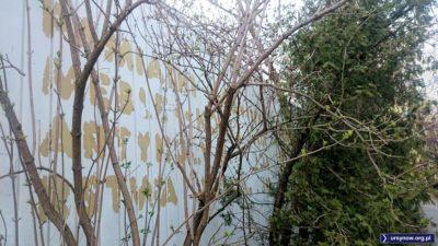 Za lichym drzewkiem przebija bogaty asortyment dawnego RDT: pamiątki, meble, artykuły gospodarstwa domowego. Fot. Maciej Mazur.