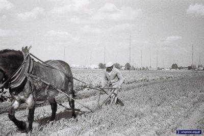 Za koniem i Panem Kazimierzem Laskowskim, który podarował to zdjęcie, widoczna radiostacja MSZ między ulicą Taneczną i Poloneza. Prowadzenie prac polowych w pobliżu anten wymagało uzgodnienia z czynnikami, ale ministerstwo wypłacało też odszkodowania.